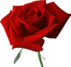 """Résultat de recherche d'images pour """"roses"""""""