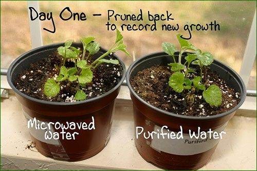 micro-ondes-plante-1