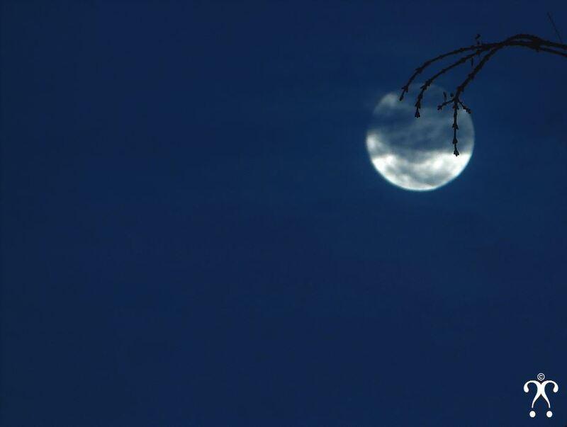 Fleur de lune