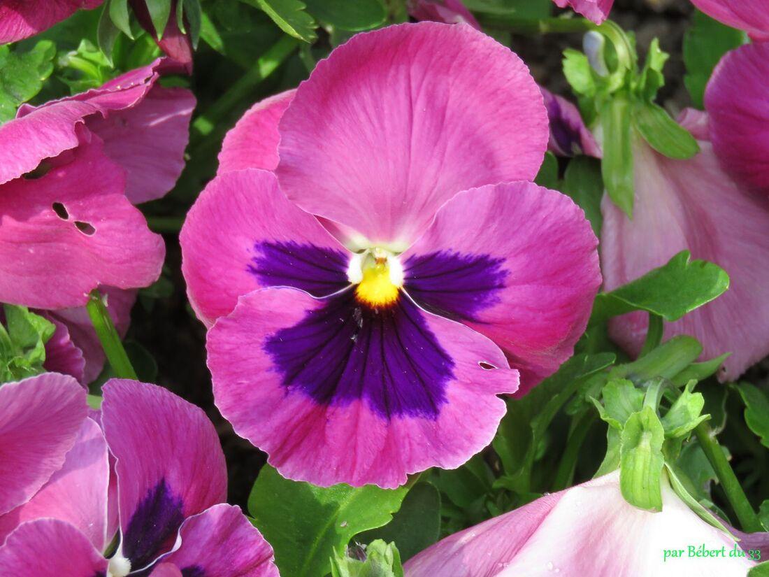 des fleurs à Angers