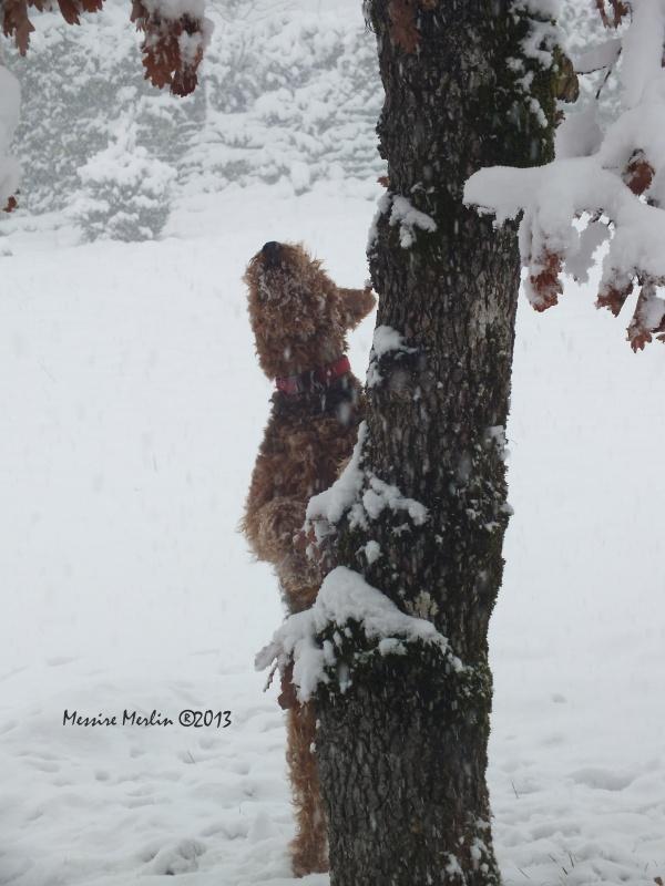 Il neige, il a neigé, il neigera......