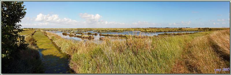 Vue panoramique sur les marais d'Ars-en-Ré - Ile de Ré - 17