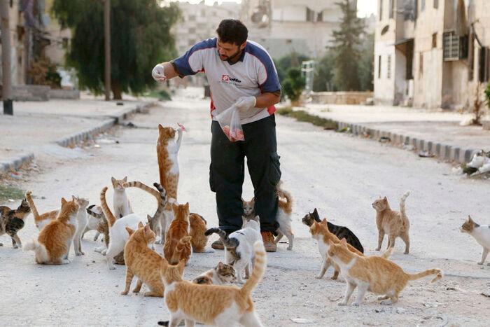 Alaa et ses chats