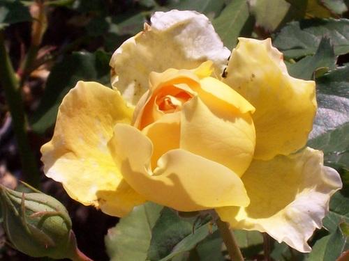 Les fleurs gérées par Jean Pierre (en vacances)