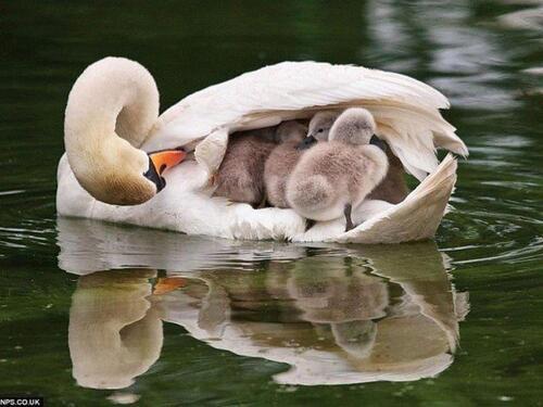 Fête des mères .
