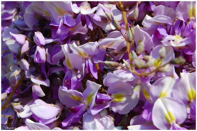 photos-fleurs 0293