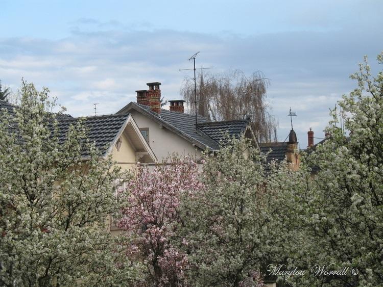 Ciel d'Alsace 262