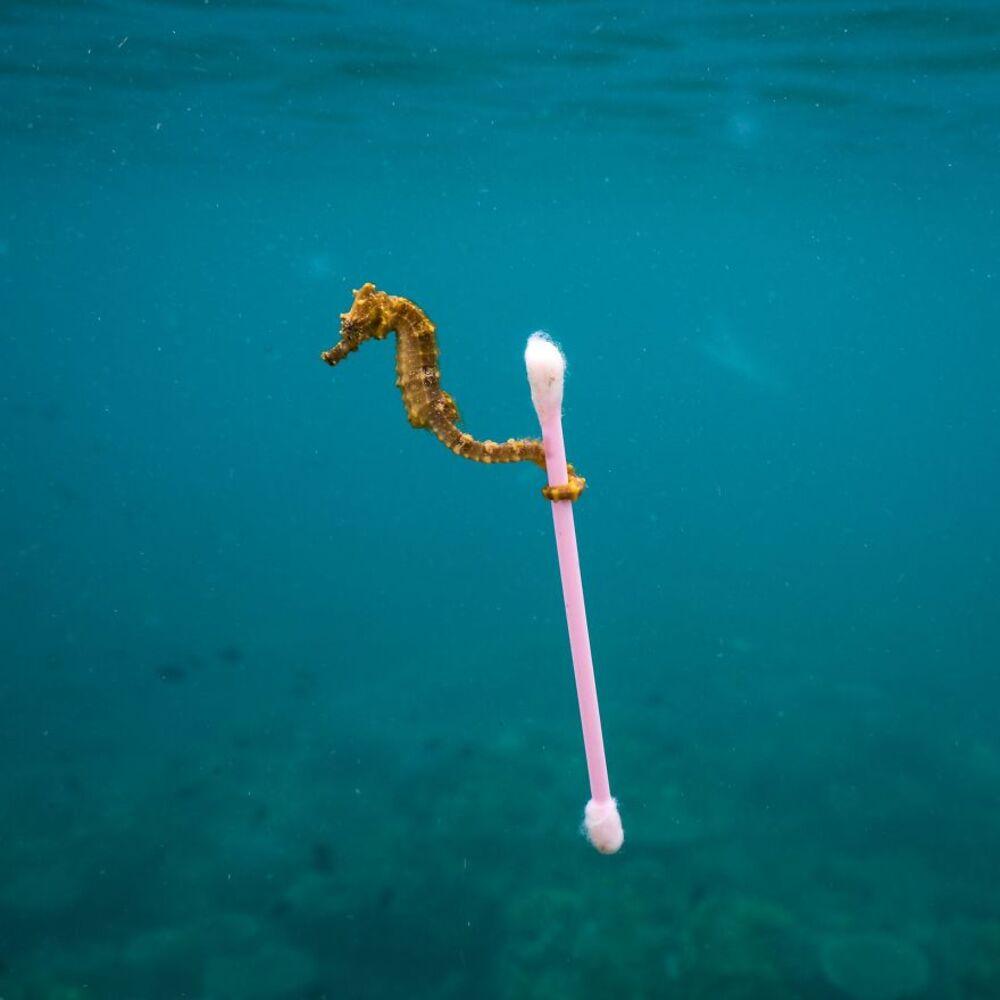 3. Surfeur en eaux polluées — Justin Hofman, États-Unis