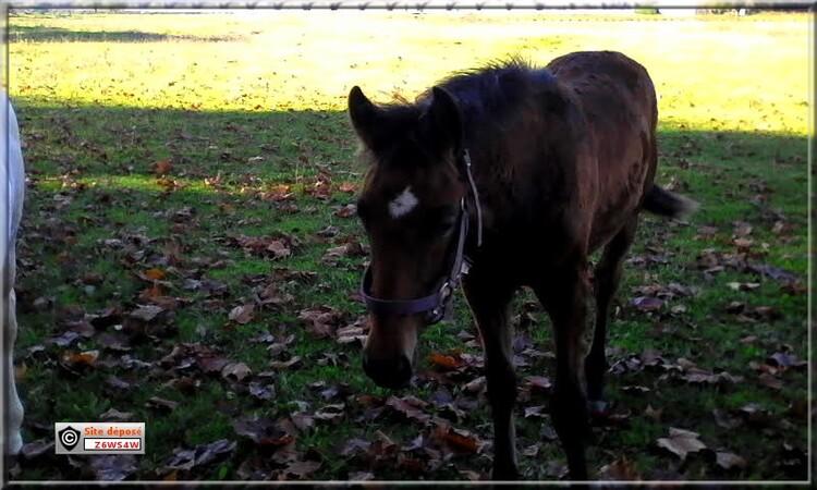 Le cheval est le meilleur ami de l'homme,pour sa beauté et son intelligence