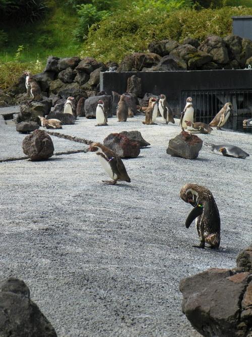 Le Parc des Oiseaux à Villars-les-Dombes ( 5 )