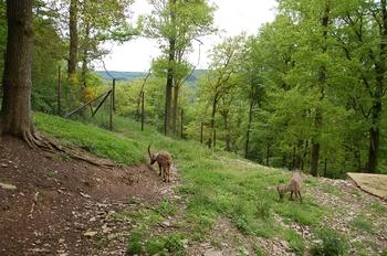 Parc animalier Bouillon 2013 enclos 195