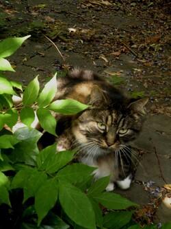 Portée de chatons à l'arrière du garage