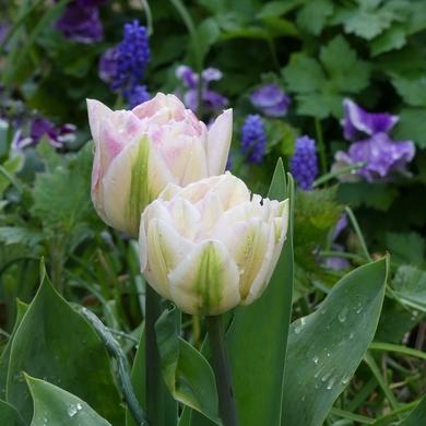 Un printemps de porcelaine...