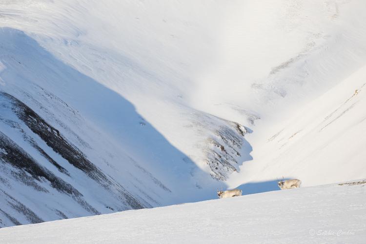 Un peu de rennes
