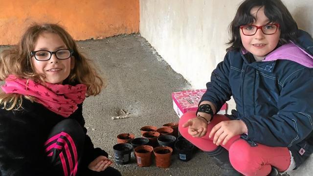 Les écoliers ont préparé des semis avant les vacances de printemps qu'ils vendront lors de la foire aux plantes, samedi 29 avril.