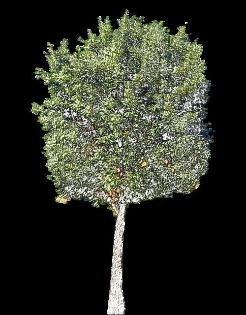 Tube arbres