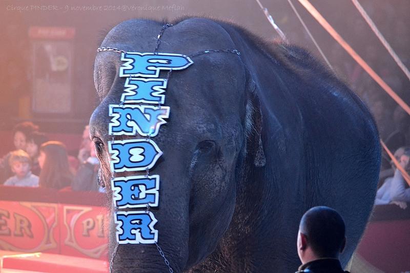 Cirque Pinder dans Pinder fête ses 160 ans ! Pelouse de Reuilly Paris 12ème