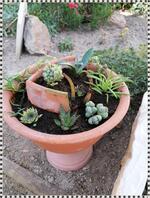 Tutoriel : Une jardinière de succulentes