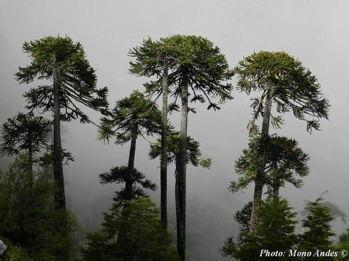 Les forêts pétrifiés