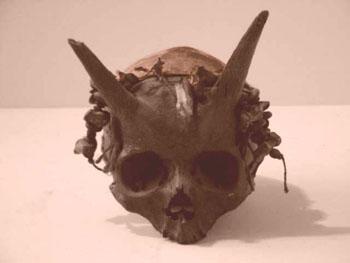 Crânes déformés inconnus
