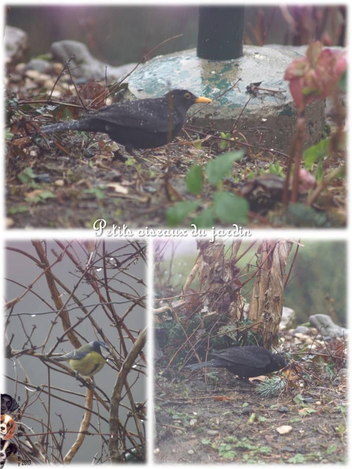 Petits oiseaux du jardin
