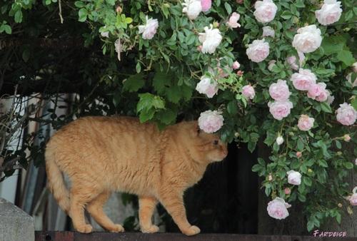 Un chat dans les roses et une bergeronnette