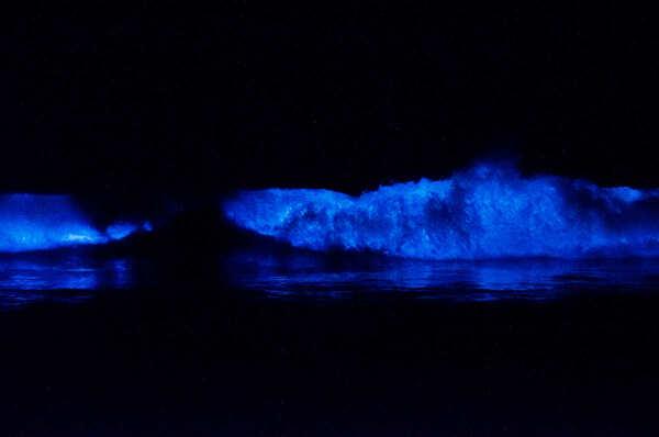 http://2.bp.blogspot.com/-fkOdZzX_LIA/Tpt5IlUH7xI/AAAAAAAAAR0/YzuPQFIRkNo/s1600/Bioluminescent_Ocean.jpg
