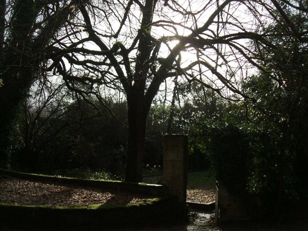 Auprès de notre arbre