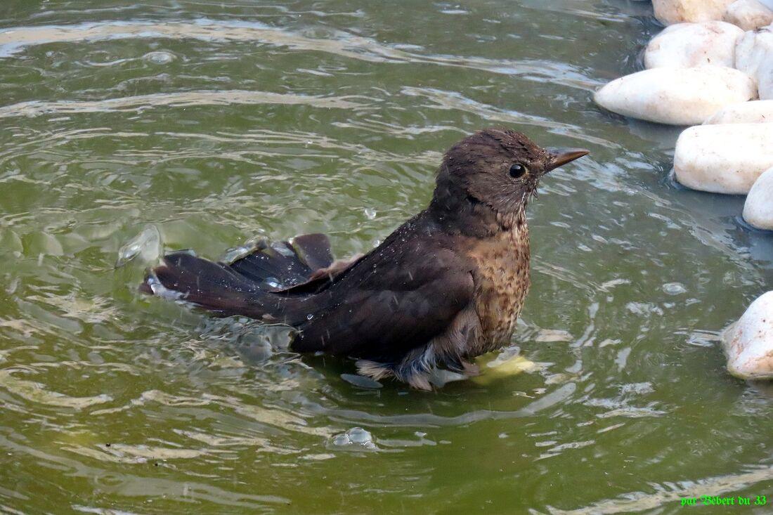 des oiseaux qui ...