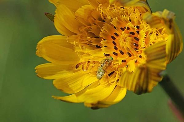 Fleurs-12-0598.jpg