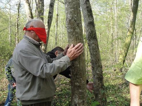Espèces forestieres du châtillonnais
