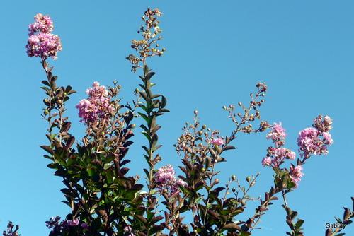 Les fleurs de mon jardin en septembre!