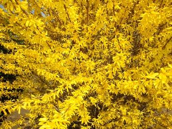 nature jaune