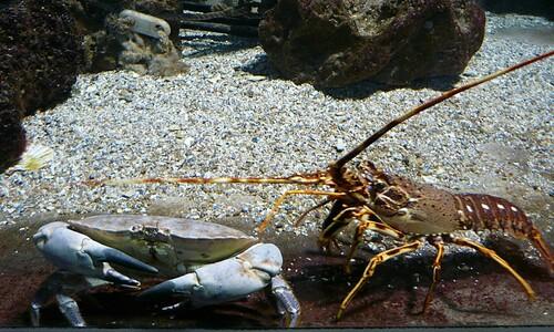 Crabe et langouste