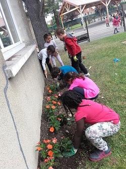 Nouvelles fraîches de notre jardin d'école