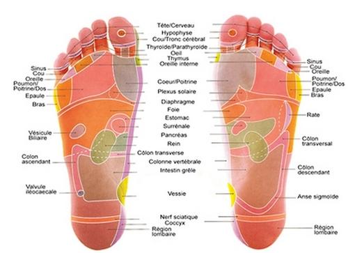 Points d'acupunctures