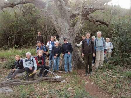 Le chêne des Olivières