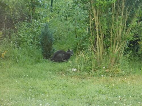 Sauveur Giordano, le chat