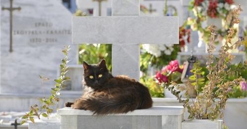 Les New Yorkais peuvent être enterrés avec leur animal