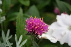 les fleurs de la roseraie