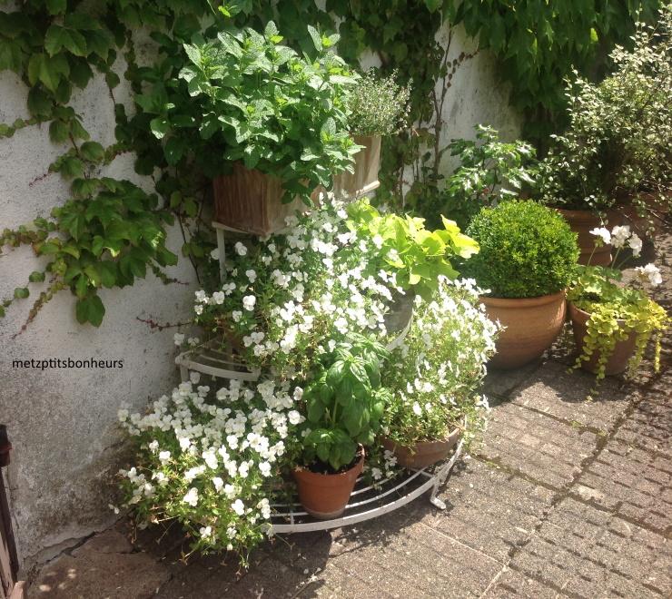 Le jardin d'Elisabeth...