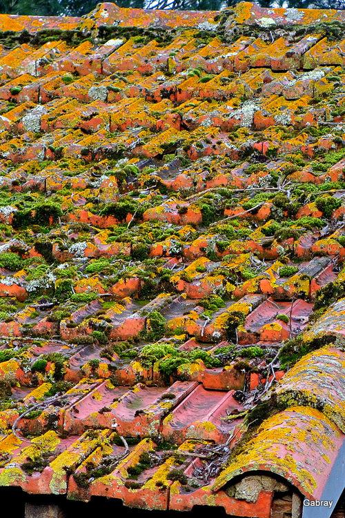 Le vieux toit ...