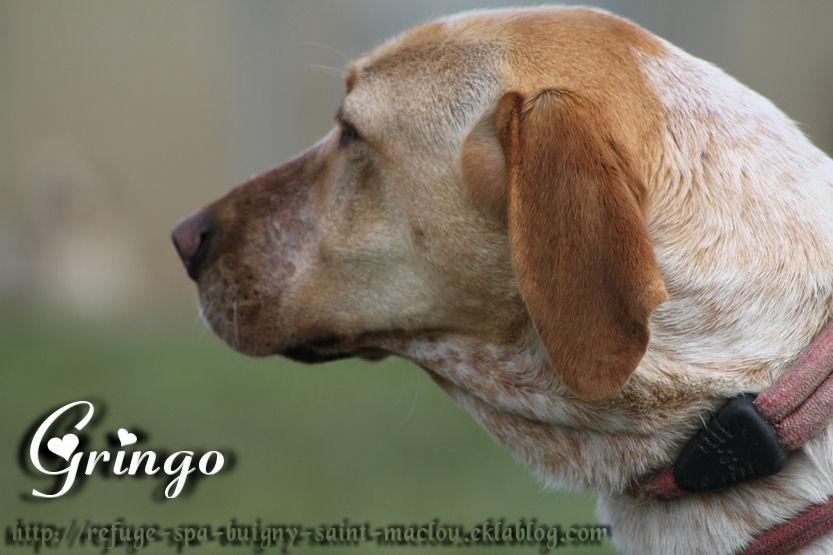 Gringo - Nouvelles photos
