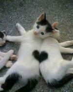 les blagounettes du chat-pitre : crise d'art- troz