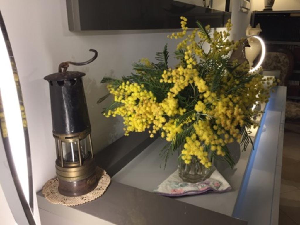 La récolte de mimosa !
