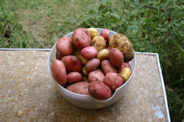 Spéciale Pommes de terre