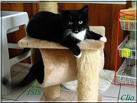 PACHA 18 OCTOBRE 2009 RR(1)