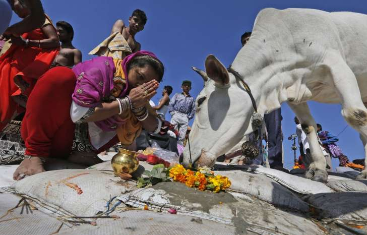 Inde: Condamnés à perpétuité pour un lynchage au nom de la défense des vaches sacrées