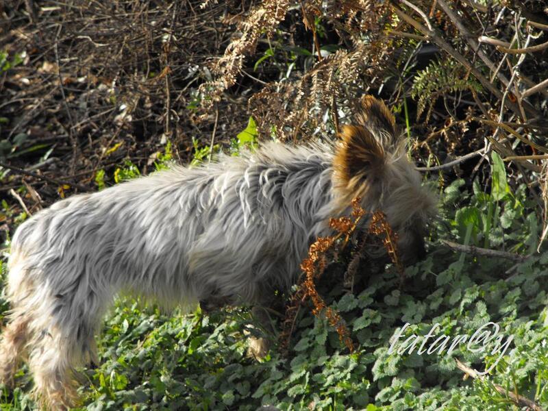 Ahhhh... toujours un chien qui traine !..... 1)