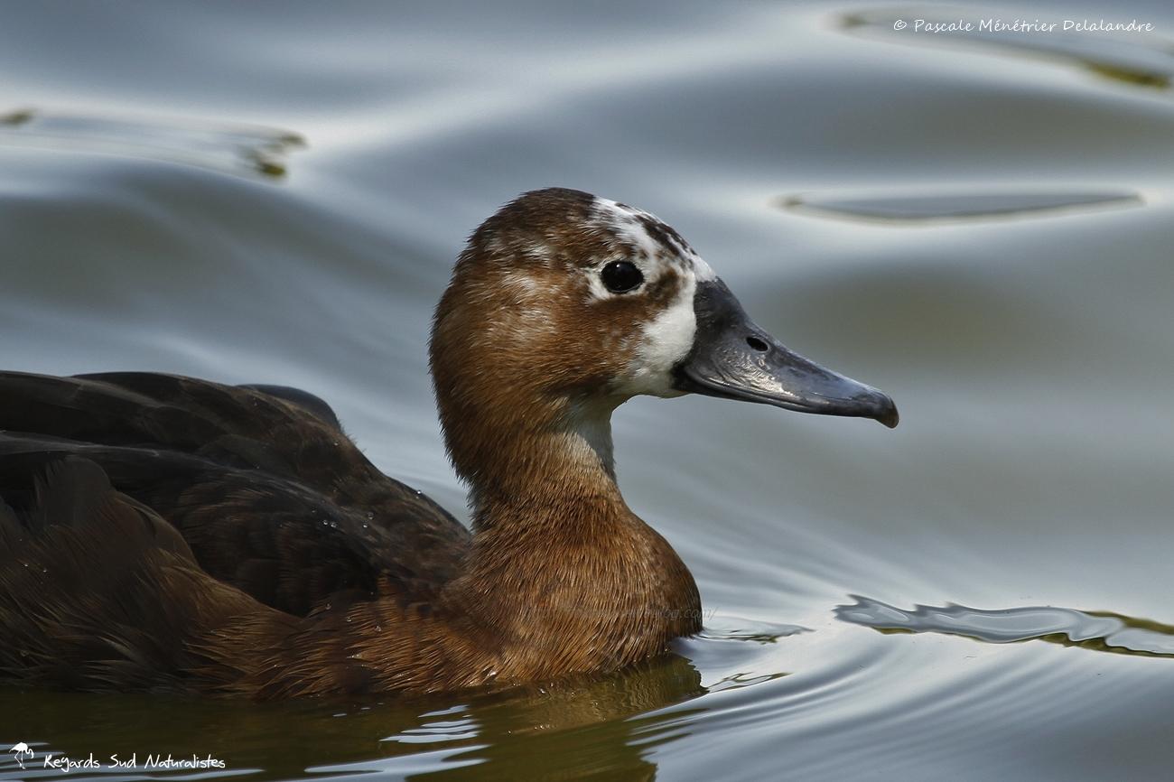 Nette brune ♀